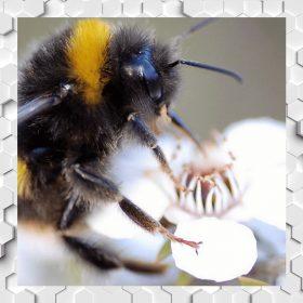Manuka Honey with Bee Venom